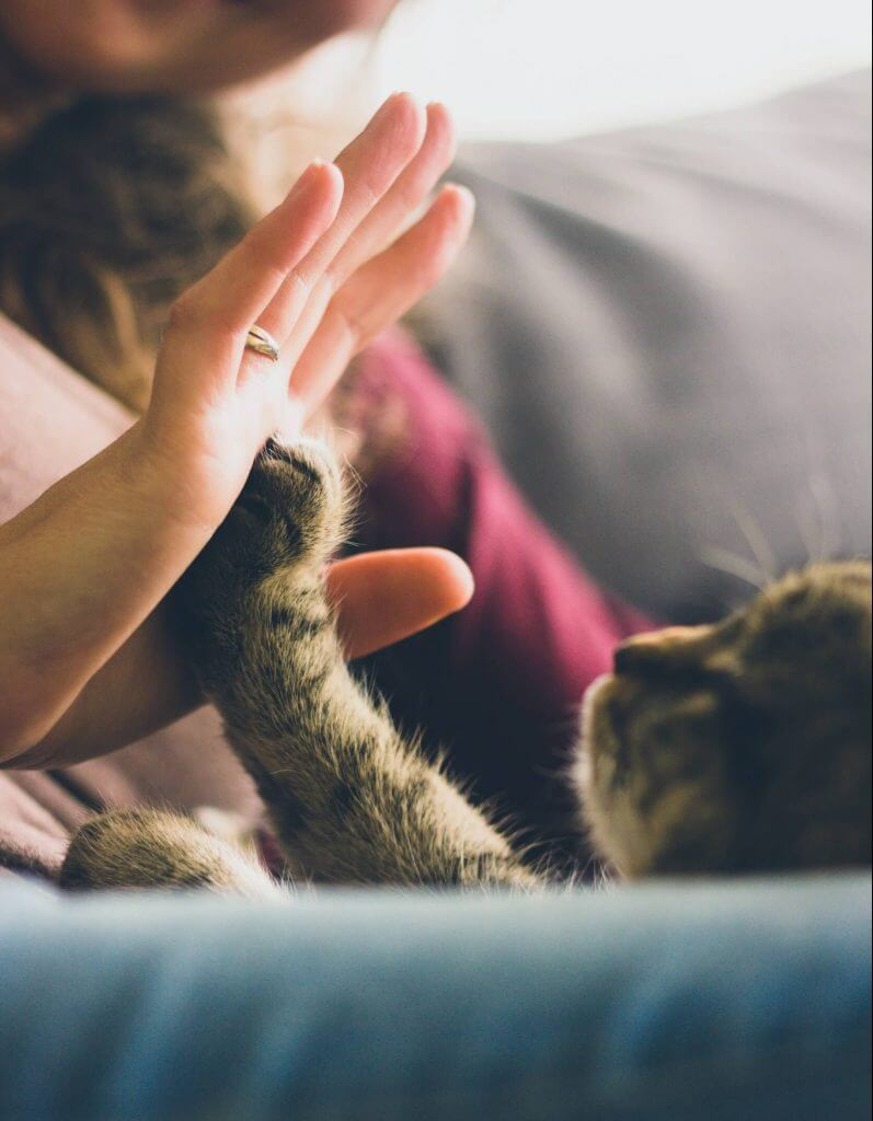 Cat high-fiving a woman